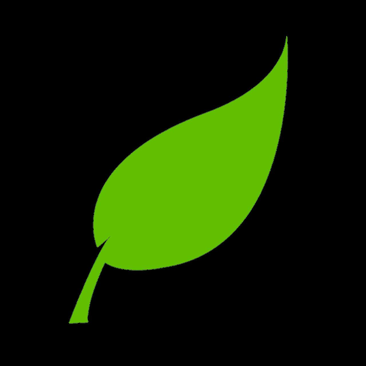 leaf-310555_1280